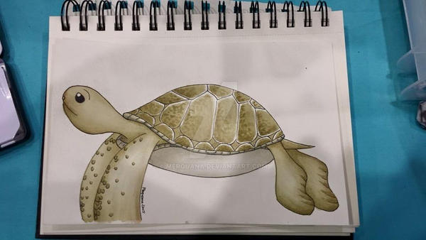 turtle by Merquana