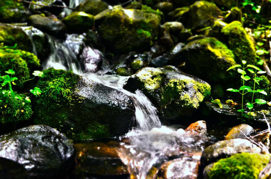 Creek by moss-024