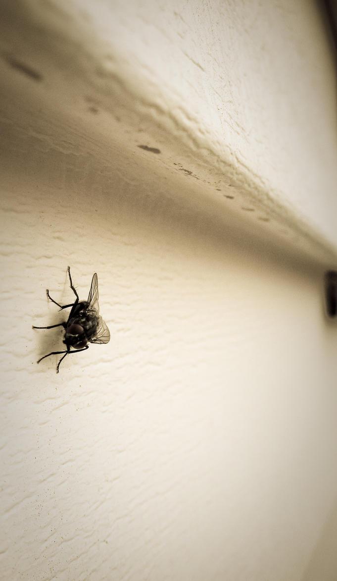 Big Fly by gustavovelarde