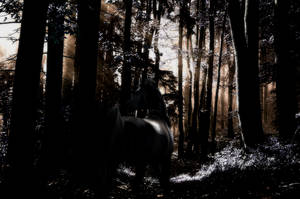 Dark Forest by AmandaMarie89