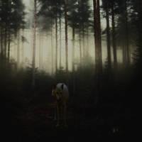Lone Wolf by AmandaMarie89