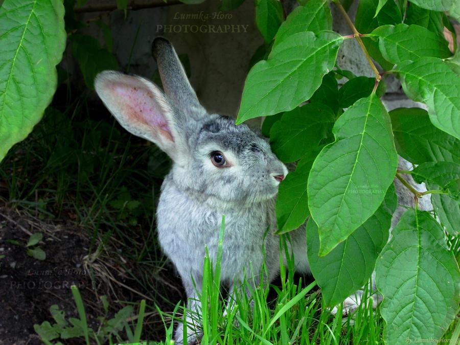 Nice rabbit by Lunnika-Horo