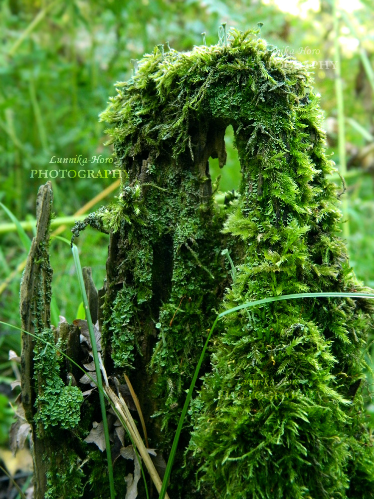 moss at the forest`s stumb by Lunnika-Horo