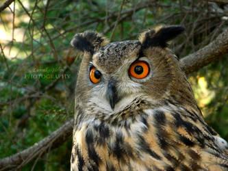 Orange eyes [PRINT WITHOUT WATERMARK] by Lunnika-Horo