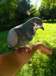 Pet by Lunnika-Horo