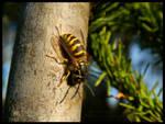 Autumn wasp by Lunnika-Horo