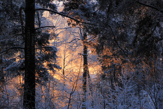 Pink sunset at snowy day