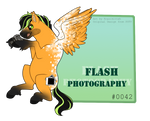 POTV: Flash Photography