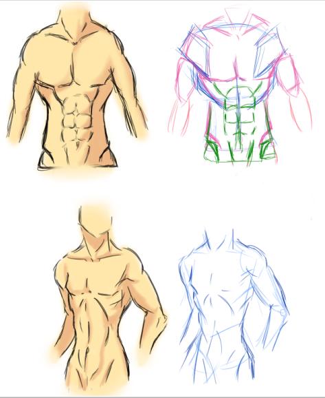 Male Torso Anatomy 1 By Vietii On Deviantart