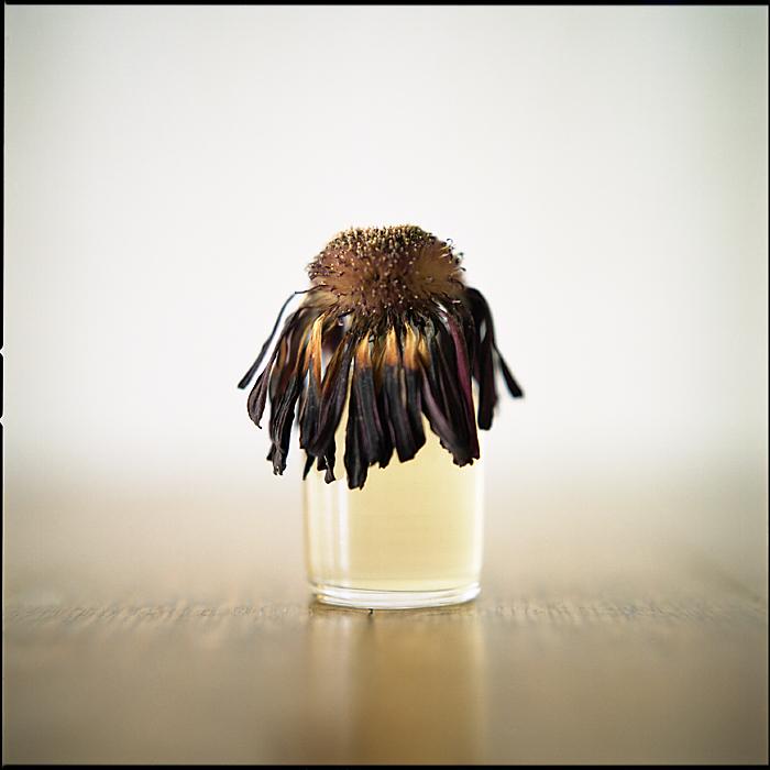 Flower 2 by tkhr