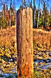 Stump HDR by pachocanadian