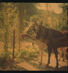 Lubitel 2 - Horses