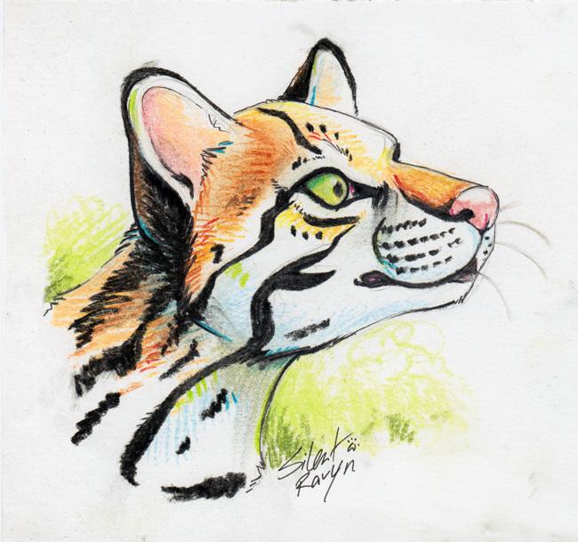 Ocelot Pastel Sketch by SilentRavyn