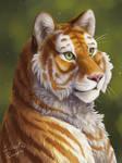 Tabby Tiger Portrait