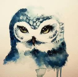 Owl by rokkihurtta
