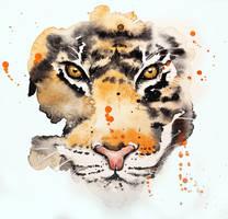 Tiger by rokkihurtta