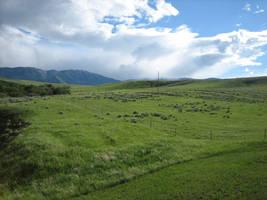 Montana by Scything