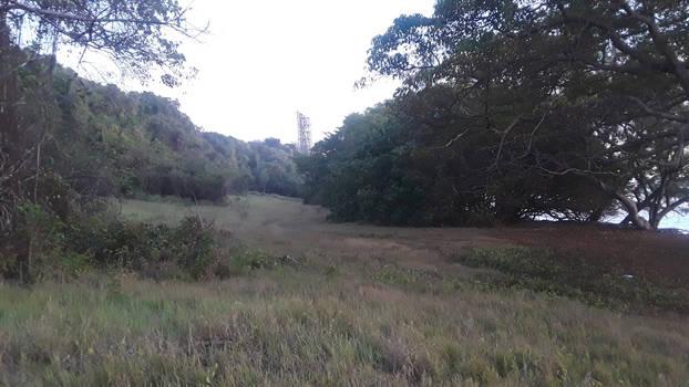 The view nature of maycocks bay