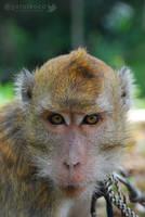 Monkey by gat0t