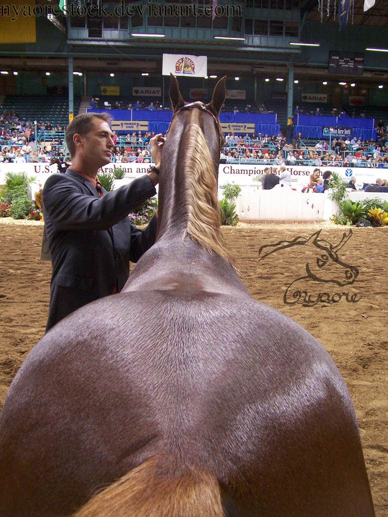 US Nationals - Halter 18 by Nyaorestock