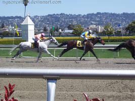 Golden Gate Fields - Racers 01 by Nyaorestock