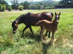 BS - July - Mom+Foal 02