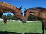 September 09- Mares + Foals 08