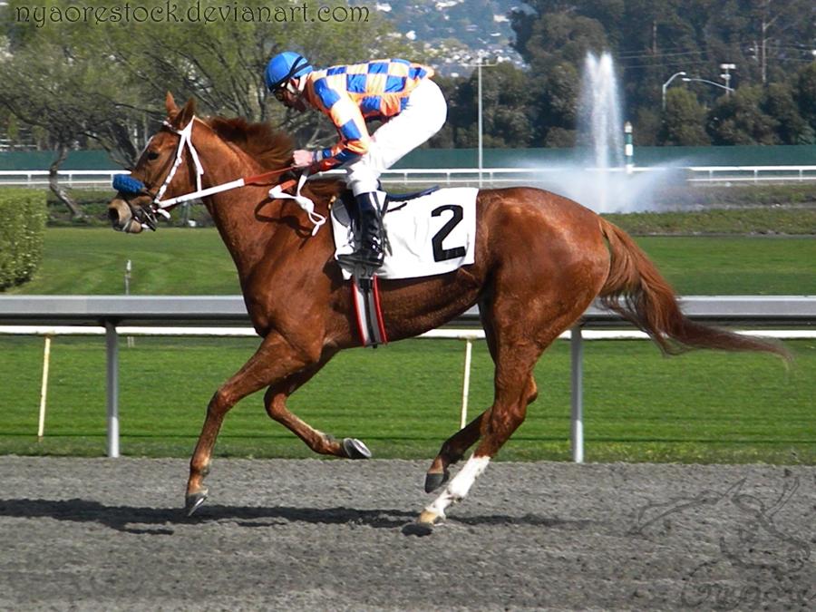 Golden Gate Fields - Racers 44 by Nyaorestock