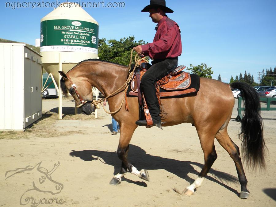 Rancho Murieta - Western 06 by Nyaorestock