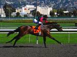 Golden Gate Fields - Racers 84