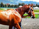 Golden Gate Fields- Racers 126