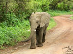 Africa - Elephant 5