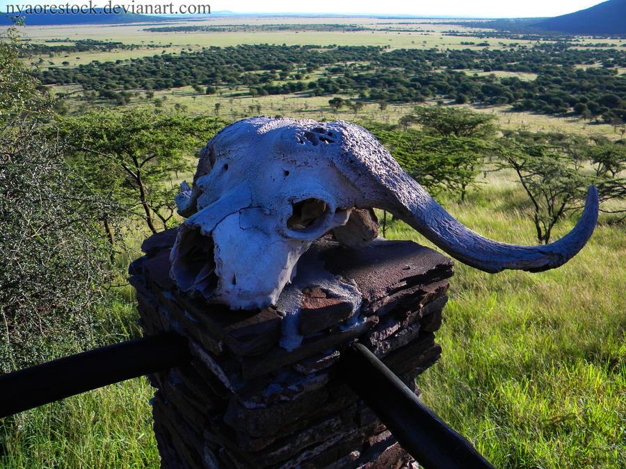 Africa - Skull 2 by Nyaorestock