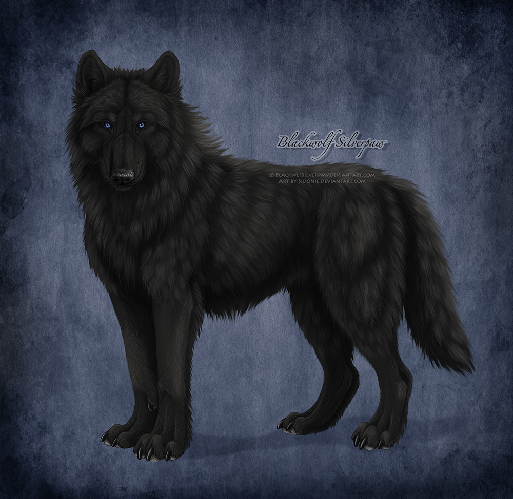 Black Wolf Blue Eyes Drawing | www.imgkid.com - The Image ...