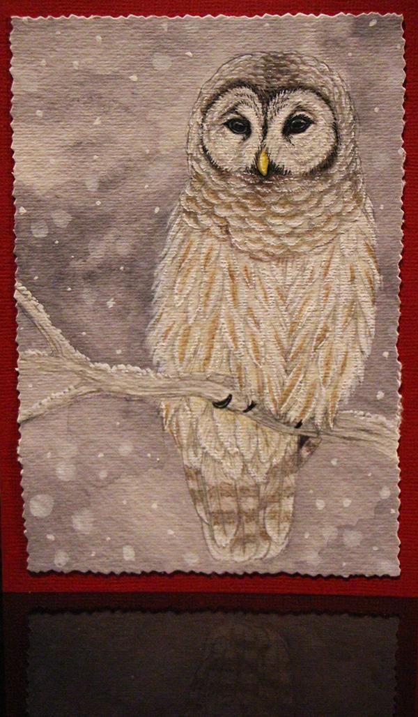 Barred Owl by Sidonie