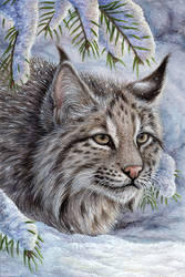 Bobcat Card by Sidonie
