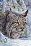 Bobcat Card