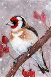 European Goldfinch by Sidonie