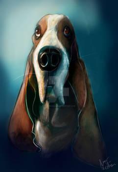 Commission Basset Hound Head Shot Coloured Sketch