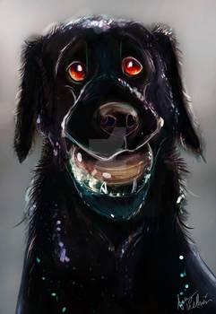 Commission Blackie