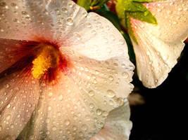 Flower vol. II by madziass
