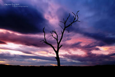 Marbled Sky by simonebyrne