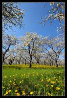 Spring In Full Swing by Julian-Bunker