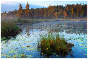 Wetmore Pond Morning by Julian-Bunker