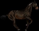 pixel horse - yoruuko kiriban by AguaZero