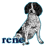 dog pixel tag - english cocker spaniel