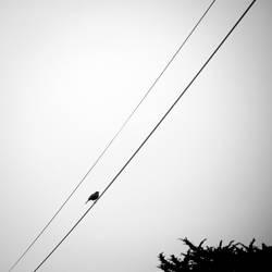 alone - 7