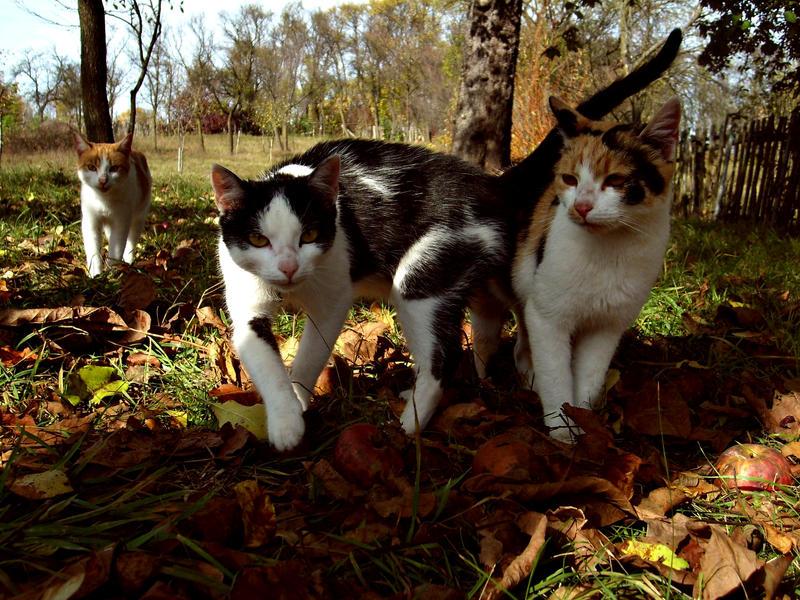 cats by BeatitudineEfemera