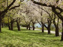 Cherry Blossom Season 06 by Shinigami-Stock