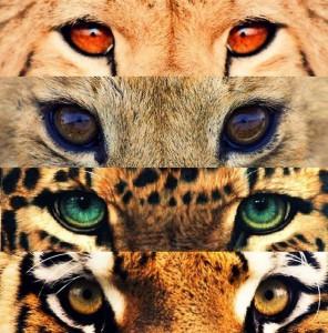 CataSand-cat's Profile Picture